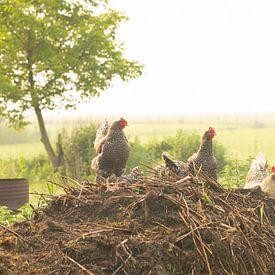 Mistige ochtend een boerenerf von Marijke van Eijkeren
