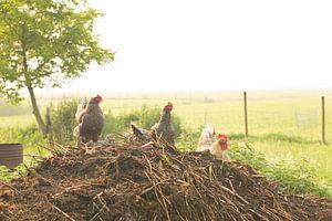 Mistige ochtend een boerenerf van