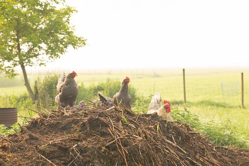Mistige ochtend een boerenerf van Marijke van Eijkeren