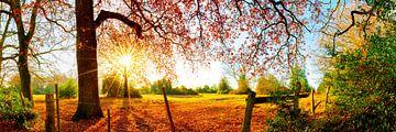 Idyllische Landschaft im Herbst mit Wald, Wiese und Sonne von Günter Albers