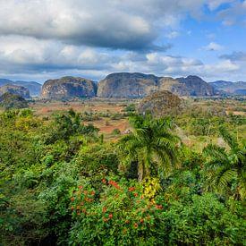 Viñales valley in Cuba van René Holtslag