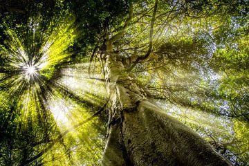 Ochtend Jungle van Pascal Sunday