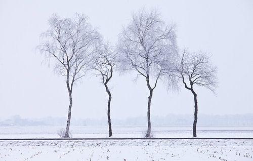 Trees von Anne Koop