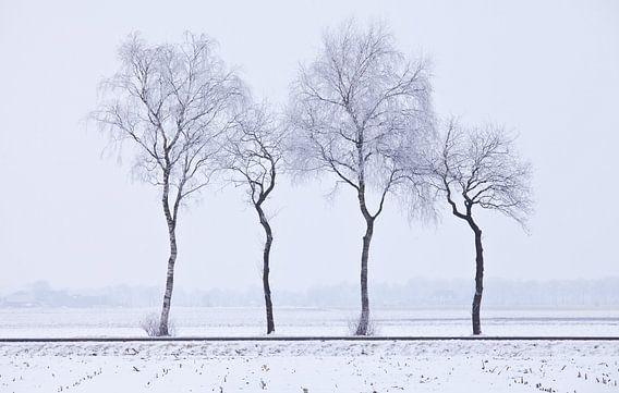 Trees van Anne Koop
