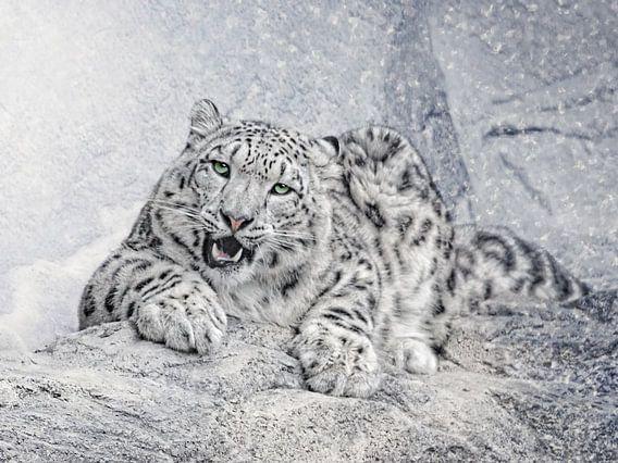 der Schneeleopard van Joachim G. Pinkawa