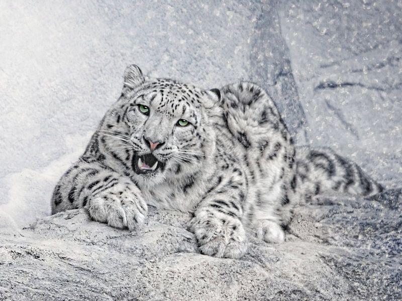 Der Schneeleopard Par L Artiste Joachim G Pinkawa