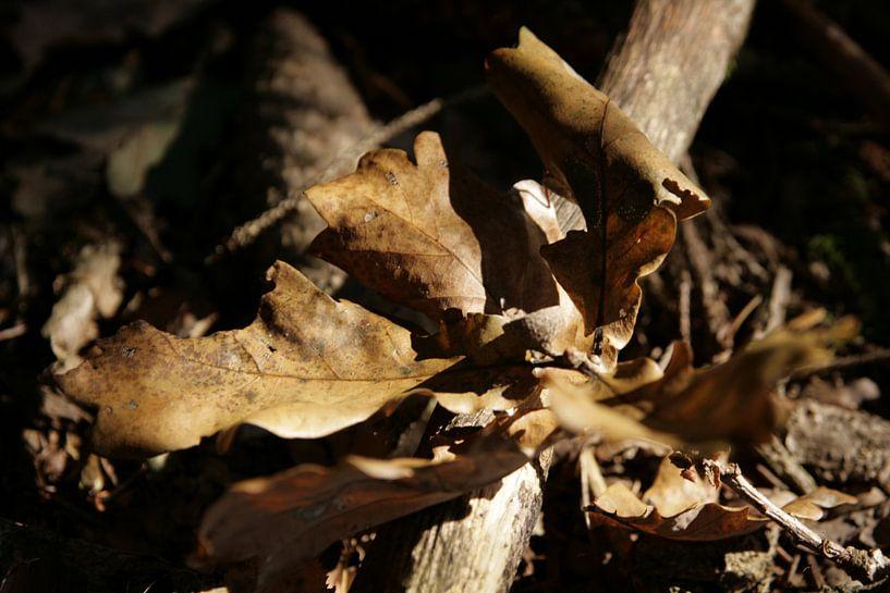 In de herfst van Betty Heideman