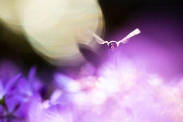 Droomvlucht van Sander Meertins
