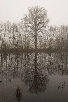 Boomcontour met spiegeling in de ochtendmist van Tonko Oosterink