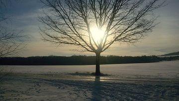 Love tree von Vera Laake