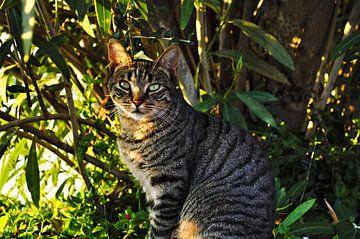 Wilde kat in Ibiza van Marije van der Vies