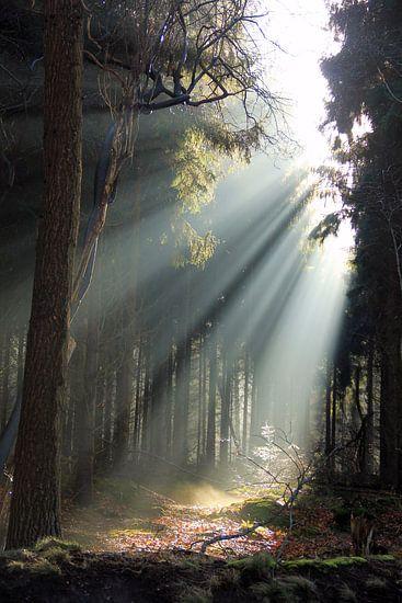 First light van Hielke Roelevink