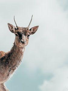 Hello, my deer