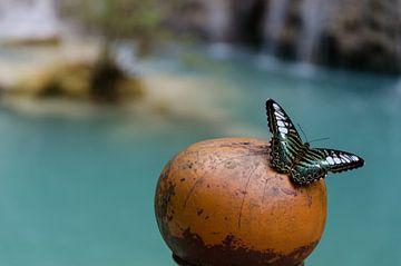 Vlinder bij de waterval van Eline Willekens