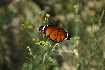 Ein oranger Schmetterling in einer Graslandschaft von Johnno de Jong