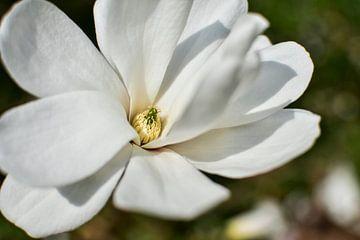 Weiße Blüte vor neutralem Grund von Nadine Rall