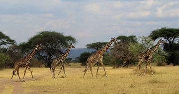 giraffes von marjolein veldman