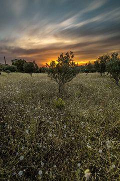 Mooie oranje zonsondergang in Lorgues, Frankrijk.  von Tim Laan