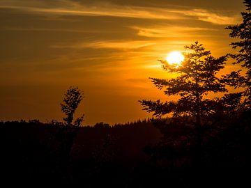 Sunset Forest van Picsall Photography