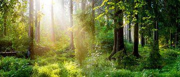 Zonnestralen in het bos van Günter Albers