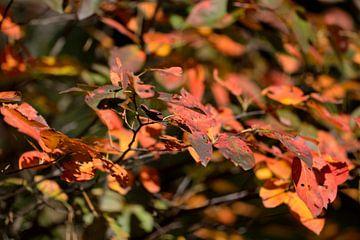 herfstbladeren van Petra De Jonge