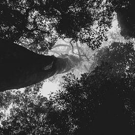 kijk omhoog langs de stam van een boom van Ennio Brehm