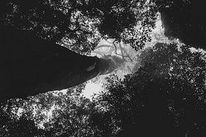 den Blick entlang eines Baumstammes zu richten