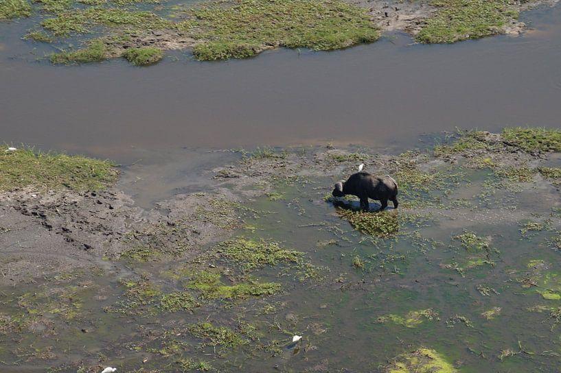 Buffel vanuit de lucht van Erna Haarsma-Hoogterp