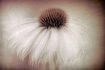 Dansende witte bloem van Francis Dost
