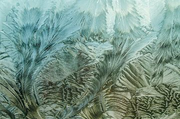 Bevroren windscherm van Sasha Samardzija
