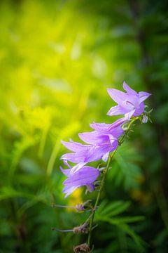 Violette Blume von Alvin Aarnoutse