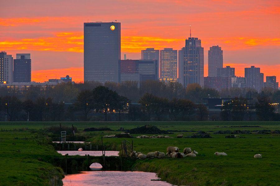 Skyline Rotterdam gezien vanaf de polder