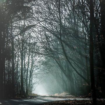 light in de wood van Freddy Hoevers
