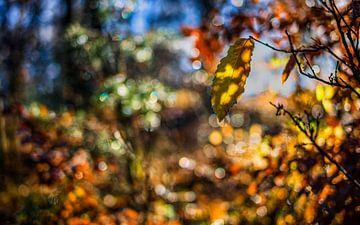 Herfstkleuren. 03 (16x10) van Timo Bergenhenegouwen