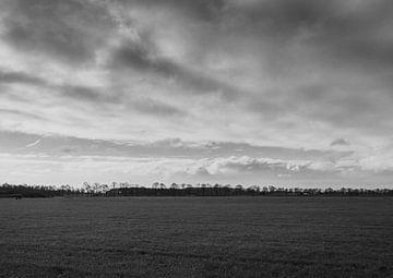 Weite Aussicht auf die Landschaft. Schwarz-Weiß-Ansicht der Wiese. Mit einer Reihe von Bäumen am Hor von Lieke van Grinsven van Aarle