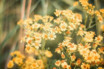 Fröhliche Blumen von Myrthe Vlasveld