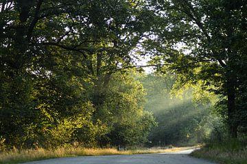 Licht im Wald von AJ Zuidema