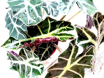 Kamerplant: Alocasia Zebrina | Olifantsoor 1-B von MoArt (Maurice Heuts)