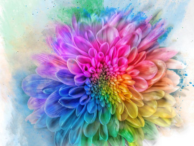 Regenboog bloem van Harry Stok