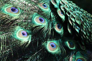 Pauwen veren von Monique Struijs