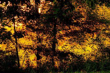Goldener Wald von Niek Traas