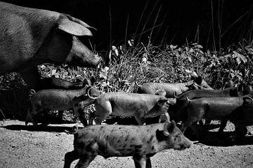 Freie Schweine von Hannelore