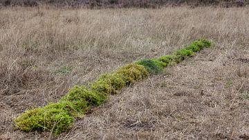 Grüne Linie; Landschaftskunst von Dick Doorduin