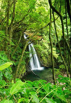 Waterval in de Azoren, Salto do Prego, Azoren, Portugal van Sebastian Rollé - travel, nature & landscape photography