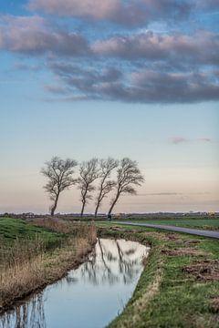 Slootje bij de Sondeler Leier met vier scheefgewaaide bomen van Harrie Muis