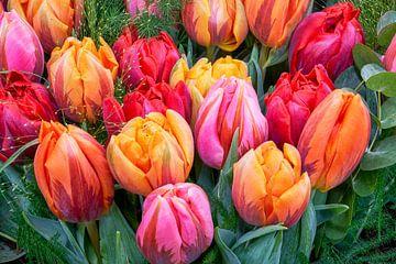 gekleurde tulpen van eric van der eijk
