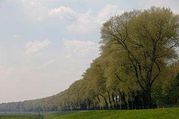 Dijk bij Genderen, Noord-Brabant von Rens Kromhout
