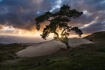 Sonnenuntergang Veluwe von Rick Kloekke