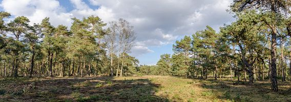 Bos in lentezon van Marcel Pietersen