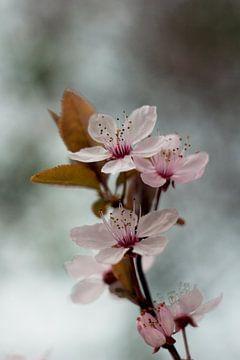Blüte von Marianne Henstra